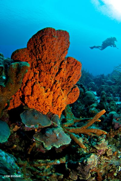 Curacao Underwater World All West Eng